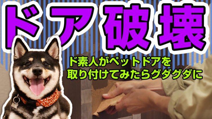 【ペットドア 取り付け】ドア破壊!?柴犬用のドアをサクッと取り付ける→超絶グダグダに。