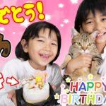 猫用ケーキでハッピーバースディ☆モカちゃん1歳の誕生日パーティ♡himawari-CH