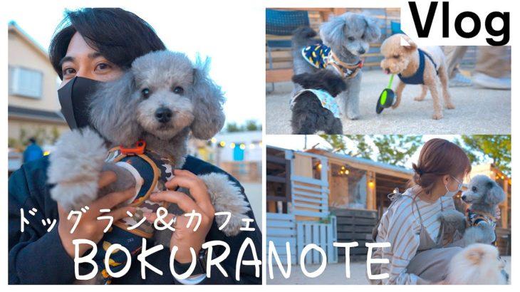 🐶犬のディズニーランド!?最高にオシャレなドッグランで視聴者さん達にたくさん可愛がってもらいました。【トイプードル】【BOKURANOTE】