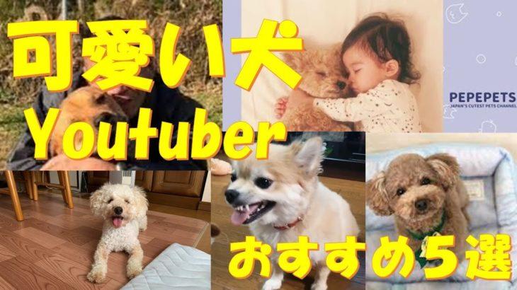 【可愛い犬Youtuberランキング】おすすめ5選!