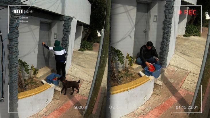 Abandonó a su perrito para darle una mejor vida