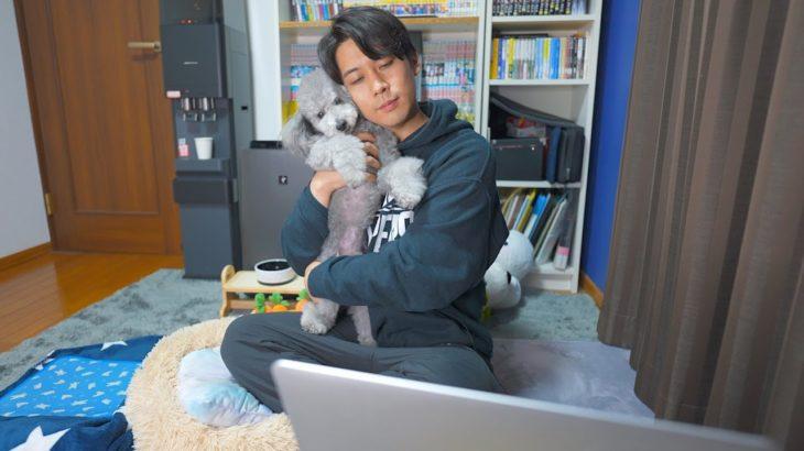 GWが終わりますので愛犬とまったり生配信します。