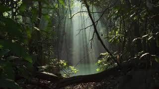 Relaxante, calmaria 🎹 Piano, florestas, pan flutue, pad, para estudar, dormir e meditar