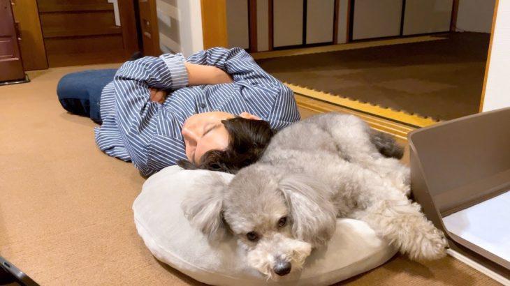 寝てしまった飼い主と添い寝する犬