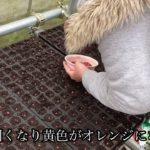 【阿南農園】ポップコーンの種まきしました!