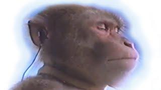 Mono escucha outro de Hola Soy German