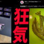 スーパーで買ったエビ→ペットにする沼参加勢 -BANクラ2期#9【KUN】