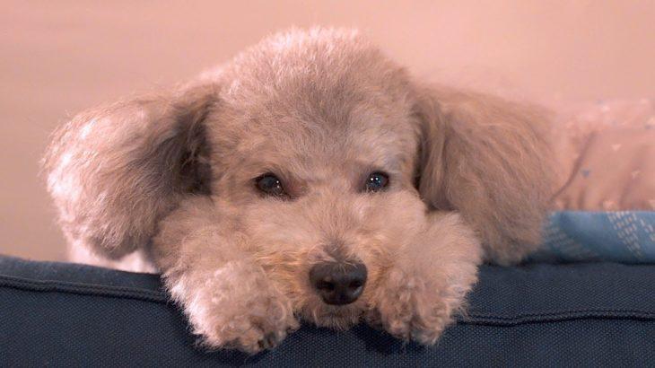 🐶愛犬グリィの誕生日を祝う。嬉しい日のはずなのに、なんだか寂しくなってしまうんです。
